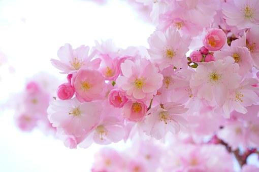 着物の柄の種類③:花が描かれた柄