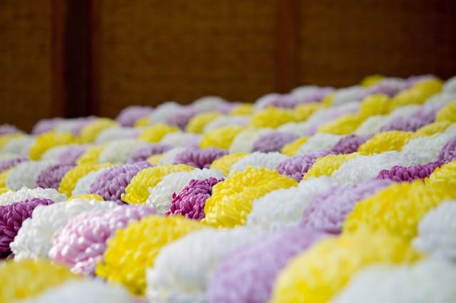 着物の柄の意味⑤:菊